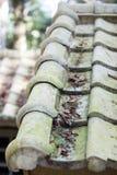 Зеленая крыша с листьями Стоковая Фотография