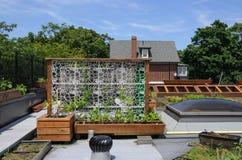 Зеленая крыша Стоковые Изображения