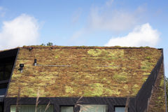 зеленая крыша стоковое фото rf