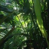 зеленая Мексика Стоковое Изображение
