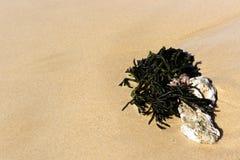 Зеленая морская водоросль на песке Стоковые Изображения