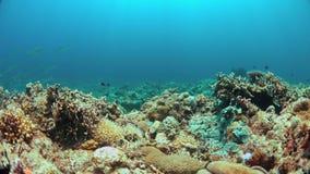 Зеленая морская черепаха на коралловом рифе 4K сток-видео