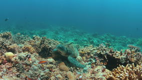 Зеленая морская черепаха на коралловом рифе 4K акции видеоматериалы