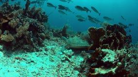 Зеленая морская черепаха плавает на коралловом рифе 4k видеоматериал