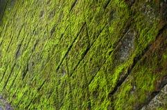 Зеленая мшистая стена с плитками Стоковое Изображение RF