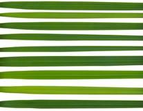 Зеленая нашивка сделанная от листьев Стоковое фото RF