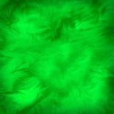 зеленая нежность Стоковая Фотография