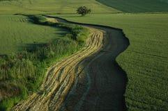 Зеленая обрабатываемая земля Стоковые Фотографии RF