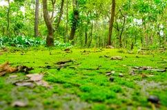зеленая дорога Стоковое Изображение RF
