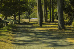 зеленая дорога стоковая фотография rf