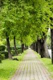 Зеленая дорожка стоковое фото rf