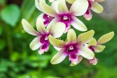 Зеленая орхидея на предпосылке природы Стоковые Изображения RF