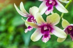 Зеленая орхидея на предпосылке природы Стоковая Фотография RF