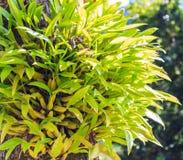 Зеленая орхидея Стоковые Изображения RF