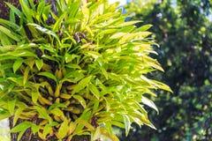 Зеленая орхидея Стоковая Фотография RF