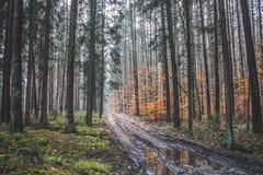 Зеленая осень Стоковые Изображения RF