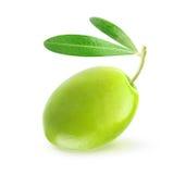 Зеленая оливка Стоковое Изображение