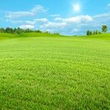 зеленая долина весны Стоковая Фотография RF