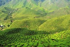 зеленая долина Стоковые Изображения