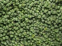 Зеленая поверхность брокколи Стоковая Фотография RF