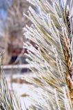 Зеленая покрытая ель Стоковые Фотографии RF