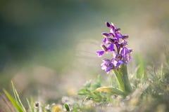 зеленая подогнали орхидея, котор стоковая фотография rf