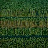 Зеленая предпосылка леса в квадратном фото Зеленый лес на заходе солнца Стоковые Изображения