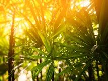 Зеленая предпосылка лета ладони и оранжевого света дамы абстрактная Стоковые Изображения