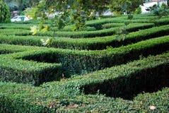 Зеленая предпосылка живущей загородки Стоковые Фотографии RF