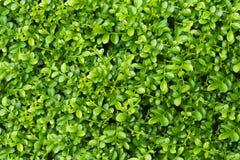 Зеленая предпосылка завода лист Стоковые Изображения
