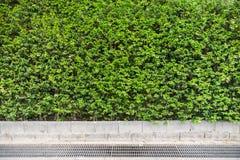 Зеленая предпосылка завода лист Стоковое Изображение RF