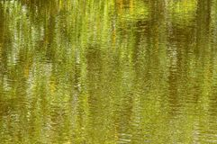 Зеленая предпосылка импрессиониста Стоковая Фотография RF