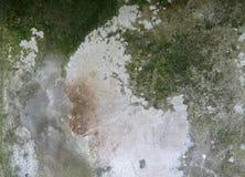 Зеленая предпосылка лишайника на стене утеса Стоковая Фотография RF