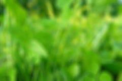 Зеленая предпосылка нерезкости Стоковое Изображение RF