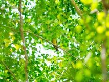 Зеленая предпосылка от природы Стоковая Фотография RF