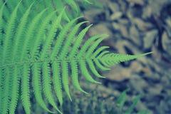 Зеленая предпосылка папоротника Стоковое Изображение RF