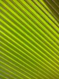 Зеленая предпосылка подкладки Стоковые Фотографии RF