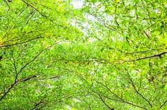 Зеленая предпосылка пущи в солнечном дне Стоковое Фото