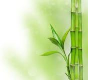Зеленая предпосылка с бамбуком Стоковое Изображение