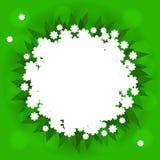 Зеленая предпосылка с белыми цветками Стоковое фото RF