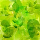 Зеленая предпосылка с различной картиной листьев Иллюстрация штока