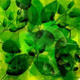 Зеленая предпосылка с различной картиной листьев Бесплатная Иллюстрация
