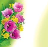 Зеленая предпосылка с тюльпанами Стоковая Фотография RF