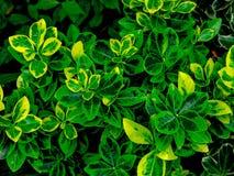 Зеленая предпосылка текстуры лист/текстуры лист/космос экземпляра Стоковые Изображения