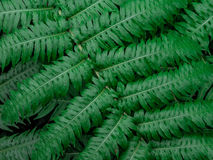 Зеленая предпосылка текстуры лист/текстуры лист/космос экземпляра Стоковая Фотография