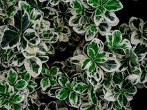 Зеленая предпосылка текстуры лист/текстуры лист/космос экземпляра Стоковые Изображения RF