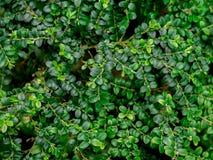 Зеленая предпосылка текстуры лист/текстуры лист/космос экземпляра Стоковое Фото