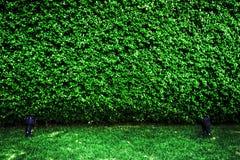 Зеленая предпосылка текстуры и sportlight стоковая фотография