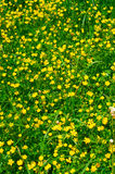 Зеленая предпосылка травы Стоковые Фотографии RF