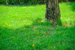 Зеленая предпосылка лужайки с желтым цветком стоковое изображение rf